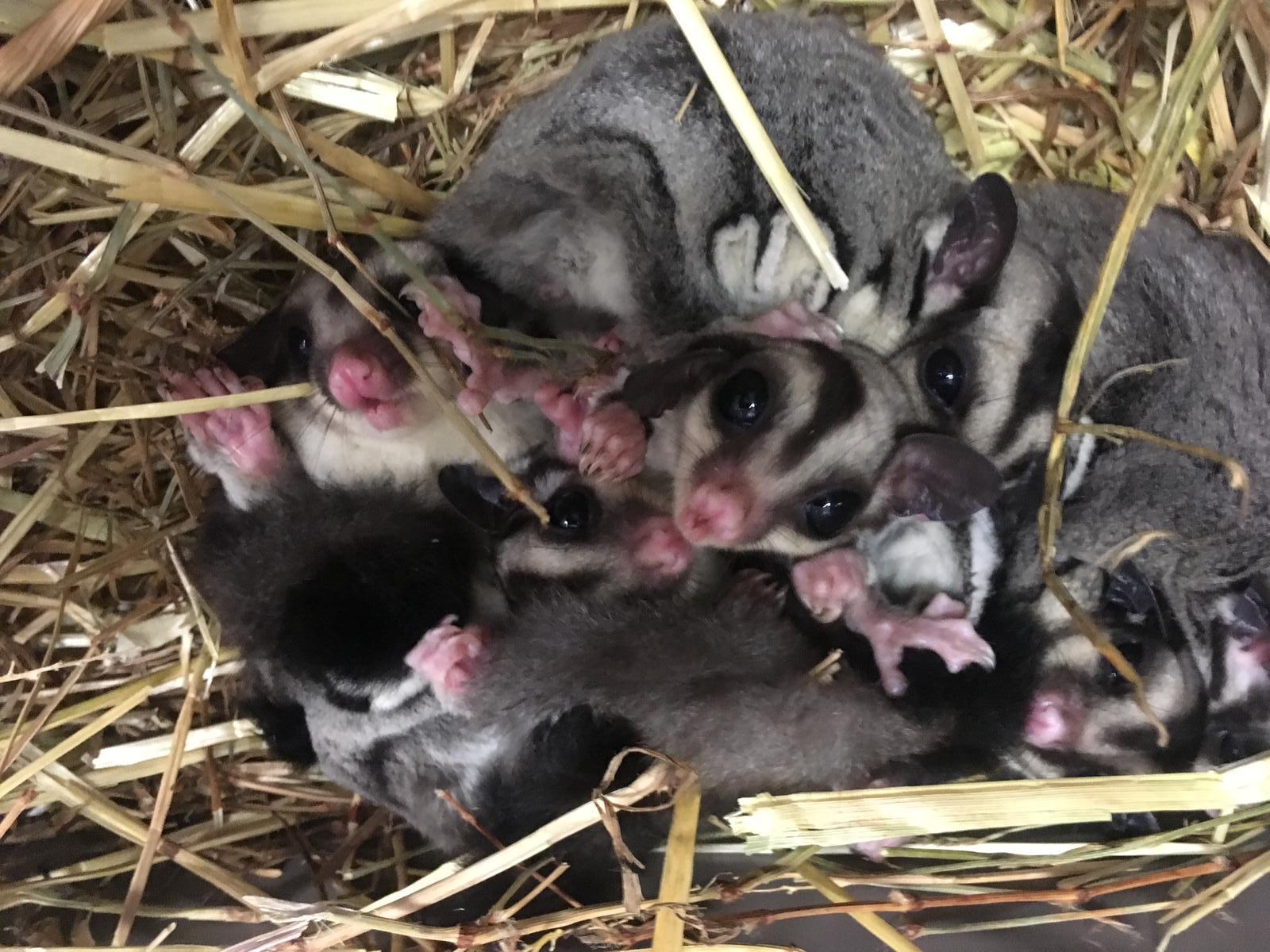 http://www.animalsholding.cz/produkty_fotogalerie/1552649076L.jpg