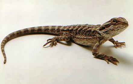 http://www.animalsholding.cz/produkty_fotogalerie/scan10040.jpg