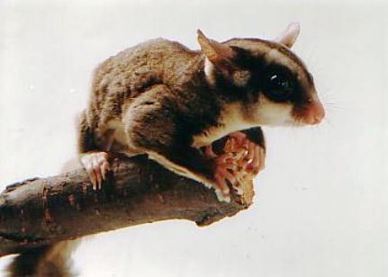 http://www.animalsholding.cz/produkty_fotogalerie/scan10046.jpg