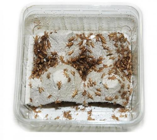 Cvrcek mikro